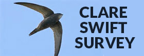 Clare Swift Survey